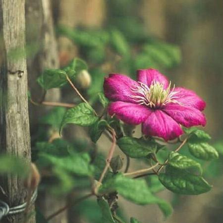 نمیچینم گلی که خار داره دلبر